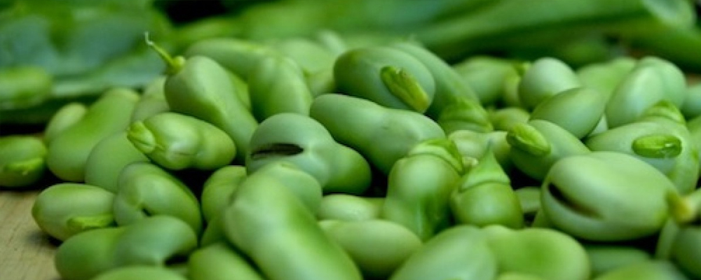 Surprising Health Benefits of Broad Beans