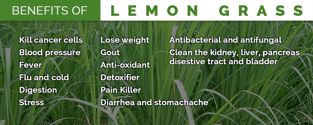 Medicinal and Health Beneficial Properties of LemonGrass