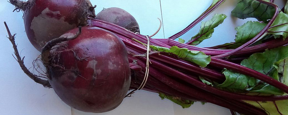 Nutritional Benefits of Vigorous Beet-root