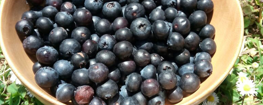 Why Should You Consume Blueberries Regularly?