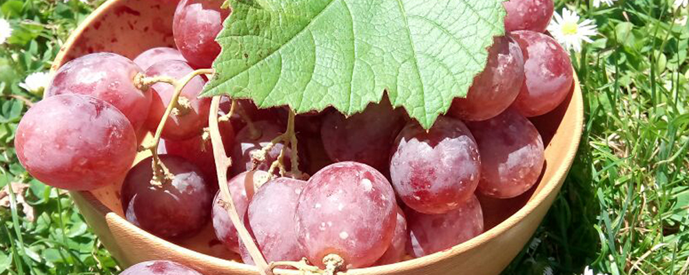 Preclude Ailments through Grapes