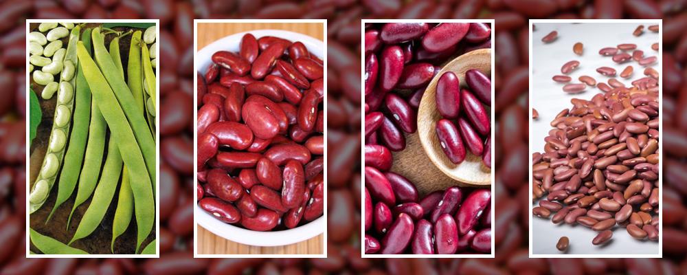 Ten Health Benefits of Kidney Beans