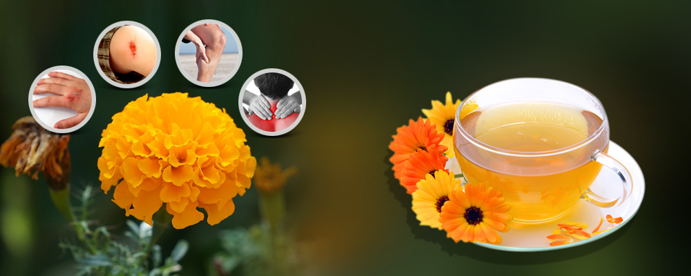 Health Healing Properties of Marigold