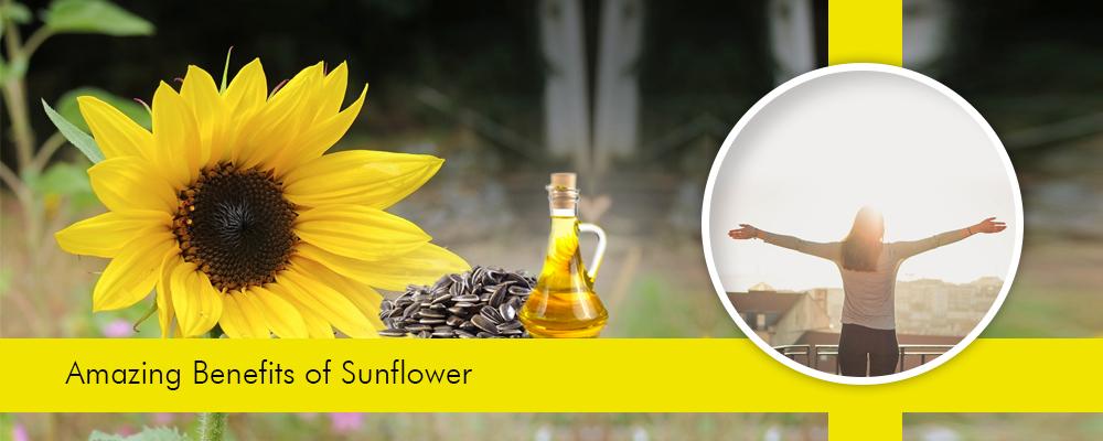 Sunflower – A Path towards a Healthy Life