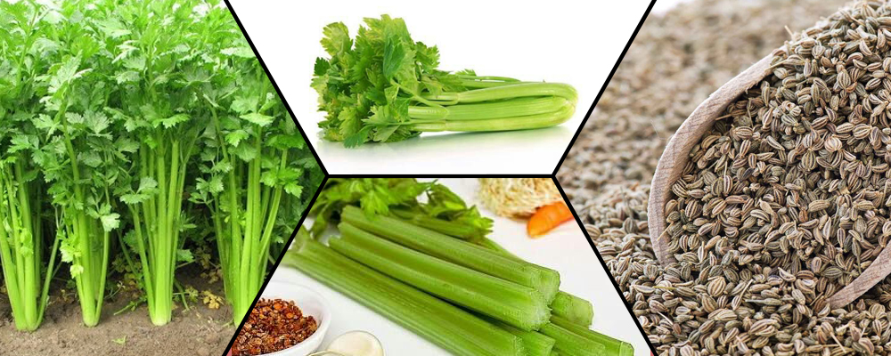 Five Reasons to Include Celery in Your Diet