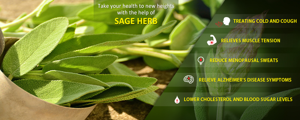 Take your health to new heights with the help of Sage herb