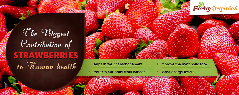 Eat Strawberries and live long