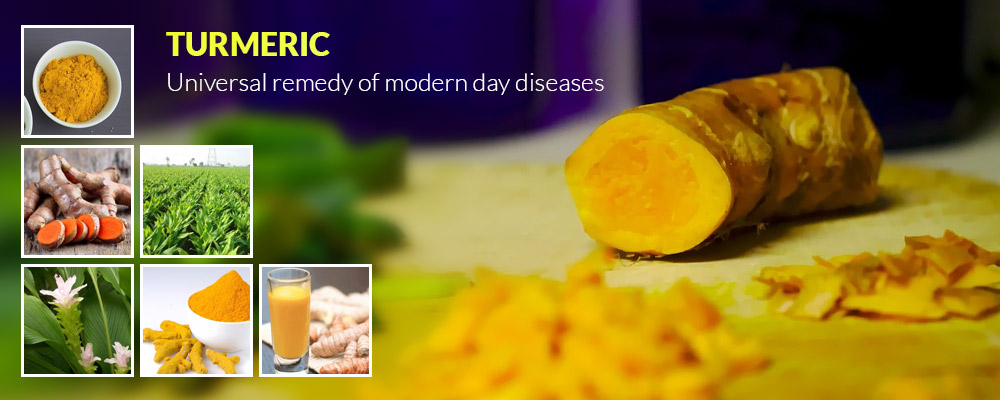 Turmeric – Universal remedy of modern day diseases