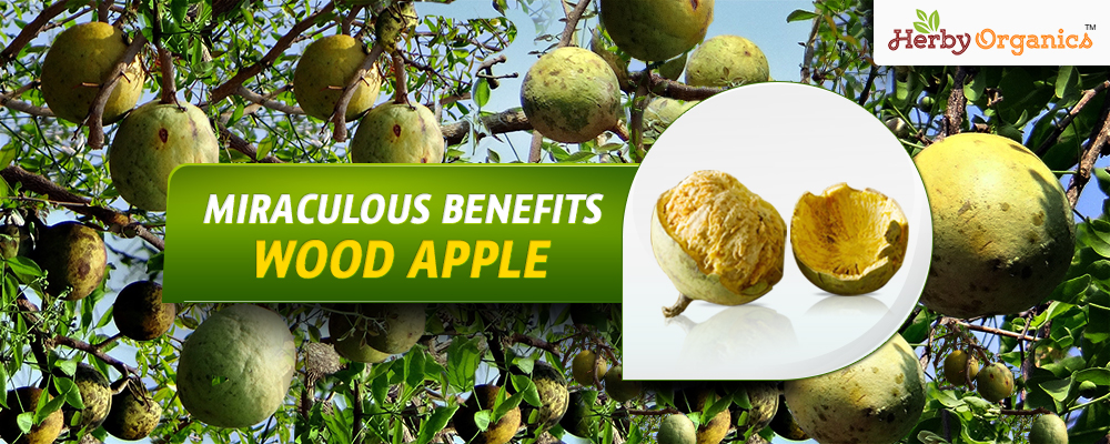 Miraculous benefits Wood Apple