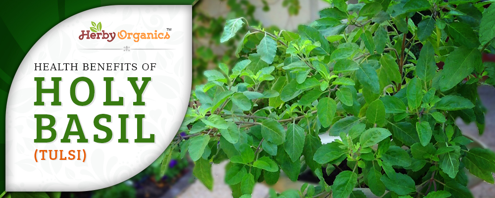 Basil (Tulsi) for medical conditions