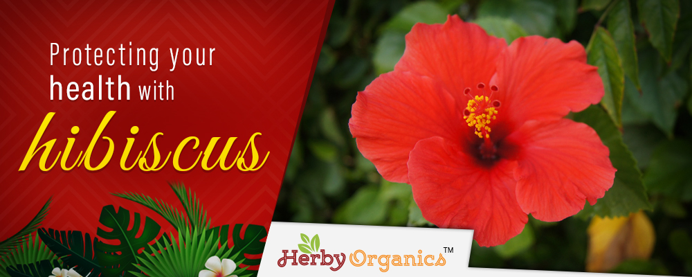 Grow your health with hibiscus